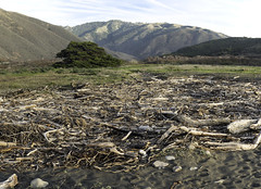 Driftwood Deposit (Joe Josephs: 3,166,284 views - thank you) Tags: bigsur california californiacoast californialandscape pacificcoasthighway pacificocean travel travelphotography westcoast scenic wood storms californiaphotography ecology nature naturephotography