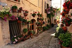 flowers (Marano Marco) Tags: marano maranomarco flowers fiori gerani umbria spello cittaspello vicoli vicolispello terrazze fiorispello perugia borghi borghiumbria