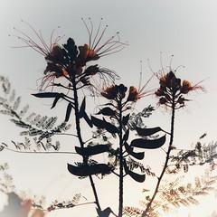 Before Sunset (7) (Polis Poliviou) Tags: nicosia lefkosia street summer capital life live polispoliviou polis poliviou πολυσ πολυβιου cyprus cyprustheallyearroundisland cyprusinyourheart yearroundisland zypern republicofcyprus κύπροσ cipro кипър chypre chipir chipre кіпр kipras ciprus cypr кипар cypern kypr ©polispoliviou2018 streetphotos europe building streetphotography urbanphotography urban heritage people mediterranean roads afternoon architecture buildings 2018 city town travel naturephotography naturephotos urbanphotos neighborhood