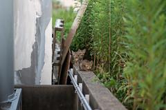 猫 (fumi*23) Tags: ilce7rm3 sony 85mm fe85mmf18 sel85f18 katze gato cat chat neko feline animal harbor miyazaki kitten apsccrop a7r3 ねこ 猫 ソニー 仔猫 emount