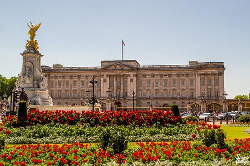 Buckingham Palace Abloom