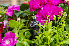 whats in your flower bed (Mark Rigler -) Tags: doctor dr who figure scale model tv series show bbc dalek cyberman scarecrow heavenly host
