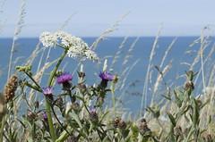 Bord de mer (Mélanie.B.) Tags: côte mer océan baie bleu nature paysage france normandie dieppe nikon d3300 tourisme