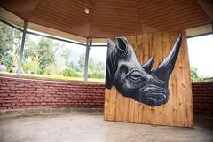 ROA in Kinigi (kuremarwanda) Tags: kinigi volcanoesnationalpark virunga rwanda roaartist roainrw roa kuremakurebakwiga mural streetart conservation creativeconservation visitrwanda rdb rwandadevelopmentboard vnphq
