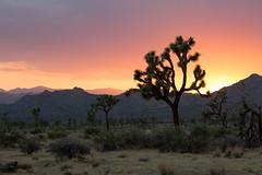 _U7A1416 (Eric.Burniche) Tags: joshuatree joshuatreenational nationalpark palmsprings california