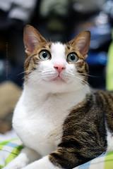 Hi, I am Jim (Steve only) Tags: fujifilm xpro1 fujinon xf 35mm f14r f14 3514 cats jim