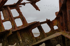 Shipwrecked (twahl8) Tags: ship wreck boat sea peter iredale oregon birds