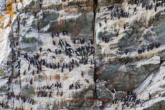 Guillemot Cliff (alan.dphotos) Tags: anglesea northwales sea shore rock boat sky cliffs guillemott cliff lobsterpot rope