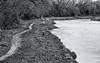 walk along the river Annan (billdsym) Tags: annan scotland path pathway river water trees wood forest blackandwhite bw