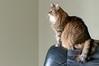 The Watcher (backbeatb00gie) Tags: elsie mainecoon nikon cat corner emptyspace furry home looking soft watching littledoglaughedstories
