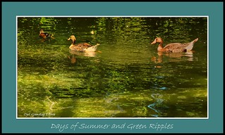Days of Summer and Green Ripples