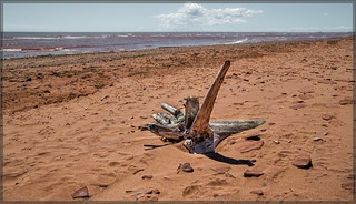 2596-  The Red Sands of Prince Edward Island