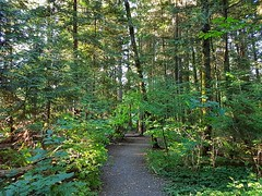 The trail on a summer's evening (walneylad) Tags: eastviewpark westlynn northvancouver britishcolumbia canada park parkland urbanpark woods woodland trees leaves branches path trail july summer evening sunset sun light shade shadows nature scenery view