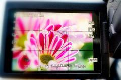 BENEDETTO LIVE WIEW (FRANCO600D) Tags: canon eos6dmarkii livewiew visore fiore flower immagine macro display fotografia scena schermolcd fotocamera reflex photographygearequipment photographygear hmm macromondays macromondaystheme franco600d