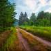 Sleepy Road