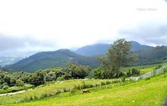 Landscape at Ooty (Santiram Karmakar) Tags: nature landscape green hill