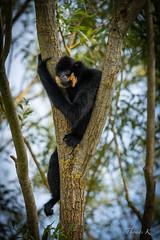 DSC00680 (Ptittomtompics) Tags: saintecroix ete lorraine parcanimalier nature wildlife animaux animals parcanimalierfaunefaunalorrainegrand est animal parc grandest