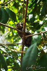 Chapada Diamantina - Ba/ Brasil (AmandaSaldanha) Tags: macaco nature natureza colours green chapadadiamantina bahia brasil