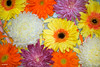 Closeup of colorful flowers floating on water background (rawpixel.com) Tags: africandaisy attractive background beautiful bloom blossom botanical botany chrysanthemum closeup collection color colorful daisy decoration drop floating flora floral flower fresh gerbera gerberadaisy isolated macro name natural nature pattern petal plant romantic spring summer surface texture textured transvaaldaisy wallpaper water wet whitechrysanthemum whitemum