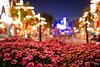 Flowers and Main Street Bokeh 4_18_2018 (Domtabon) Tags: disneyland dl dlr disney disneylandresort mousewait
