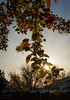 Day 161 | Sunrise Sunrise (JL2.8) Tags: starburst sunrise project365 365 photochallenge canon 6dmk2