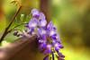 spring songs.. (salihseviner) Tags: spring song