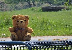 Teddy on Tour (Thomas Rausch (!)) Tags: supertele focusstack picolayexe teddybär model natur erlangen wiesengrund verdichtung teleeffekt teddy plüsch 85bilder schrittweite2