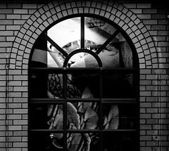 5 july 2018 - photo a day (slava eremin) Tags: 365 1day dailyphoto photoaday auckland nz newzealand shark window blackandwhite blanconegro bianconero bw