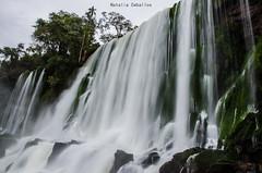 Cataratas del Iguazú (NatyCeballos) Tags: cataratasiguazu cataratas misiones efectoseda longexposition longexposure agua water naturaleza nature maravillanatural maravillas arbol arboles arboleda airelibre