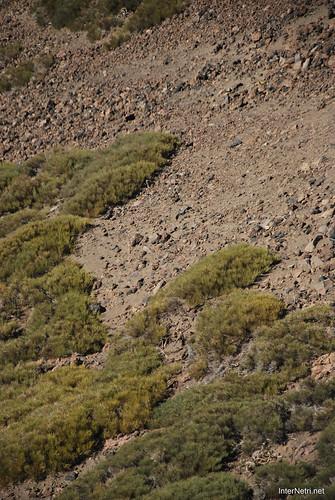На вершині Тейде, Тенеріфе, Канарські острови  InterNetri  356