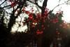 morning sunlight (gwuphd) Tags: zeiss sonnar 50mm f15 sunlight morning bokeh