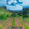 #paysage #landscape #landscapephotography #photography #phone #hdr #vignes #beaujolais #france #nuages #clouds #photographeamateur (meganesavoye) Tags: photographeamateur nuages beaujolais landscape france vignes paysage hdr landscapephotography phone clouds photography