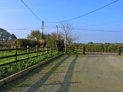 Spring Sunshine (Julie (thanks for 9 million views)) Tags: htt telegraphtuesday tree garden gates wexford ireland irish shadow fence drive hff htmt 2018onephotoeachday