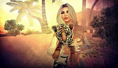 Pelochon :p (Kayleigh Lavender*) Tags: tiger tigre pet