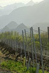 Vignes (corinne emery) Tags: grone mountain ombre nature landscape valais wallis exterieur