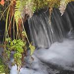 4461ex flowing Fern Falls **Explore** thumbnail