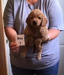 Ella Boy 1 4-21