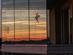 reflexos (jakza - Jaque Zattera) Tags: vidro reflexo pordosol sacada