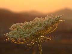nature (germancute) Tags: outdoor nature sunset sonnenuntergang balloon