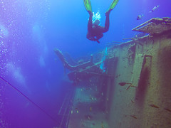 Wreck diving on the wreck of the Zenobia, Cyprus