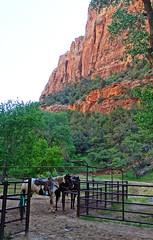 Ready to Work, Zion Lodge Corral, UT 2014 (inkknife_2000 (9 million views)) Tags: zionnationalpark usa nationalparks utah utahnationalparks dgrahamphoto trailride horses mules wranglers cowboy
