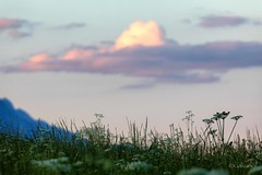 Evening On The Fields (galvanol) Tags: grass axams landscape olivergalvan alpine fields bluehour green eveningmood evening mountains galvanol