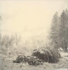 burn pile (lawatt) Tags: burn pile forest pines yosemite silver film polaroid 600 bw slr680
