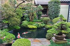 "Japan-2b-044-Miyajima - garden (david ""Djannis"") Tags: animal carpe carp 鯉 koi 広島 hiroshima japan 日本 japon nippon fish eau poisson vert green miyajima 宮島"