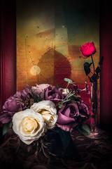Eternellement Rose (Hani Kirat Photography) Tags: rose still life nature morte color strob lightroom light flower painting paint picture samyang 35mm