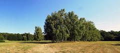 Revier Buch Sommer 2018 LSG Mittelbruch (Forstamt Pankow / Berliner Forsten) Tags: revierbuch forstamtpankow berlinerforsten sommer2018 lsgmittelbruch bäume sträucher himmel berlinbrandenburg deutschland