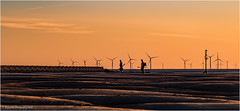 Homeward Bound (Fermat48) Tags: sunset wallasey newbrighton groyne breakwater sandbanks tide fishing fishermen windfarm windturbines rivermersey orange sand sea canon eos 7dmarkii wirral he