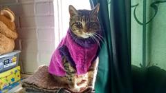 Capita nueva [Explore] (angeliquita) Tags: gatos cats pets mascotas kitten atigrado tabby capita fuxia xica motorolaxt1068