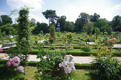 JLF17998 (jlfaurie) Tags: jardin garden bagatelle paris france francia parc parque 22072018 mpmdf jlfr jlfaurie mechas roseraie fleurs roses rosas