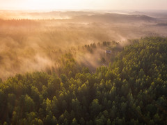 Fairy tale gone right. (Teemu Kustila Photography) Tags: drone dronephotography powervision sunset light rays forest tree green fog foggy natural naturalpark